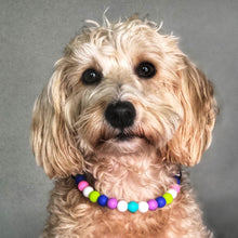 Load image into Gallery viewer, Flippin' Cool Silicone Beaded Dog Collar - Ruff Stitched Winter 2020 Collection - Portrait of Dog Wearing Collar
