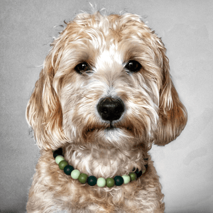 The Beaded Monkey - GI Joe Silicone Beaded Dog Collar - Ruff Stitched Spring 2020 Collection - St. Patrick's Day - Portrait of Dog Wearing Collar