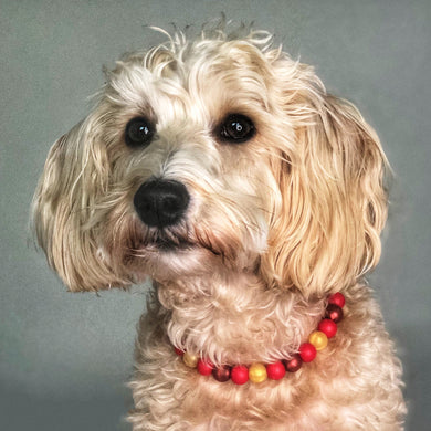 Happy Dogmas Silicone Beaded Dog Collar - Ruff Stitched Winter 2020 Collection - Portrait of Dog Wearing Collar