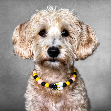 The Beaded Monkey - Honeycomb Bees Silicone Beaded Dog Collar - Ruff Stitched Summer 2020 Collection - Portrait of Dog Wearing Collar