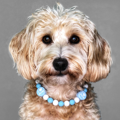 The Beaded Monkey - I Love My Mom Silicone Beaded Dog Collar - Ruff Stitched Winter 2020 Collection - Portrait of Dog Wearing Collar