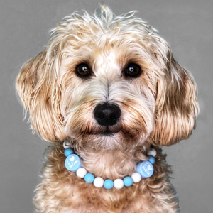 I Love My Mom Silicone Beaded Dog Collar - Portrait of Dog Wearing Collar