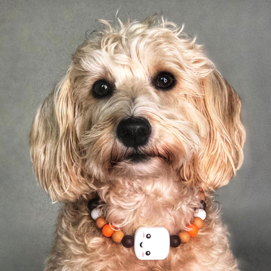 I Love You S'more Silicone Beaded Dog Collar - Ruff Stitched Winter 2020 Collection - Portrait of Dog Wearing Collar