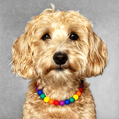 LOVE Silicone Beaded Dog Collar - Portrait of Dog Wearing Collar