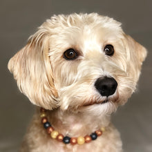 Load image into Gallery viewer, The Beaded Monkey - Copper Glitter Glam Silicone Beaded Dog Collar - Photo of Max Wearing Collar