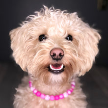Load image into Gallery viewer, Pink Glitter Glam Collar