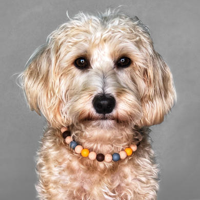 Nuts For Fall Silicone Beaded Dog Collar - Portrait of Dog Wearing Collar