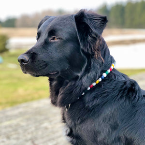 Preppy Stripes Silicone Beaded Dog Collar – Photo of Cooper Wearing Collar