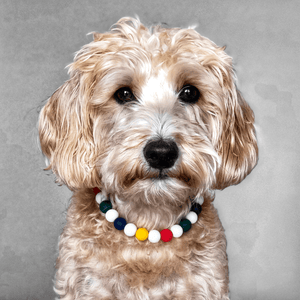 Preppy Stripes Silicone Beaded Dog Collar - Portrait of Dog Wearing Collar