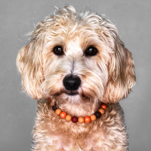 Load image into Gallery viewer, The Beaded Monkey - Pumpkin Spice Silicone Beaded Dog Collar - Ruff Stitched Fall 2020 Collection - Portrait of Dog Wearing Collar