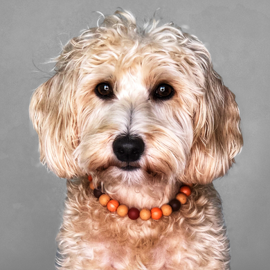 The Beaded Monkey - Pumpkin Spice Silicone Beaded Dog Collar - Ruff Stitched Fall 2020 Collection - Portrait of Dog Wearing Collar