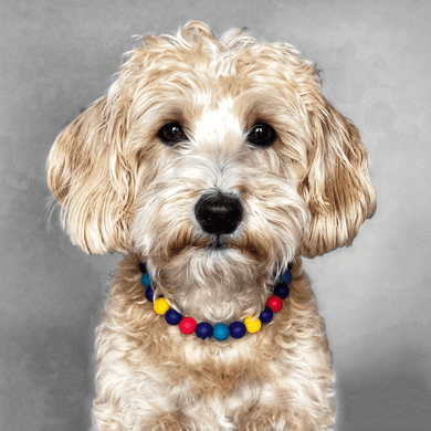 The Beaded Monkey - Sailboats Silicone Beaded Dog Collar - Ruff Stitched Summer 2020 Collection - Portrait of Dog Wearing Collar