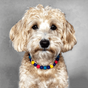 Sailboats Silicone Beaded Dog Collar - Portrait of Dog Wearing Collar