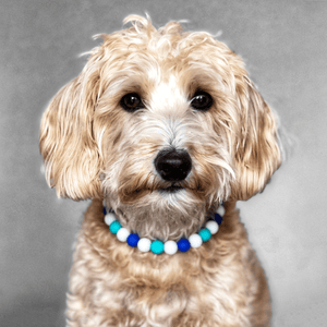 The Beaded Monkey - Sky Tie Dye Silicone Beaded Dog Collar - Ruff Stitched Spring 2020 Collection - Portrait of Dog Wearing Collar
