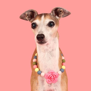 Spring Floral Silicone Beaded Dog Collar – Photo of Chelsea Wearing Collar