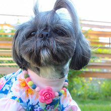 Load image into Gallery viewer, Spring Floral Silicone Beaded Dog Collar – Photo of Isabella Wearing Collar with Matching T-Shirt from Ruff Stitched (ruffstitched.com)
