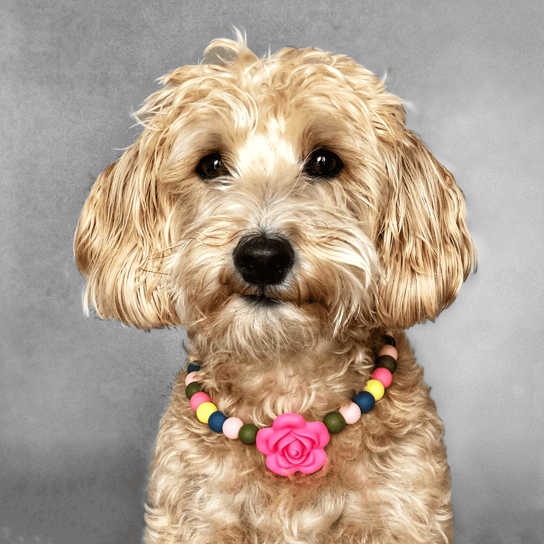Spring Floral Silicone Beaded Dog Collar - Portrait of Dog Wearing Collar
