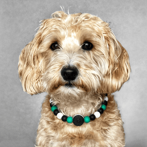 The Beaded Monkey - Starbarks & Oreos Silicone Beaded Dog Collar - Ruff Stitched Spring 2020 Collection - Portrait of Dog Wearing Collar