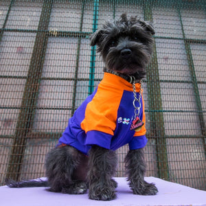"The Bacon Collection - Bacon Wearing The ""Extra"" Dog Shirt (Purple & Orange)"