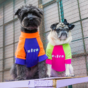 "The Bacon Collection - Bacon Wearing The ""Extra"" Dog Shirt (Purple & Orange) and Pickles Wearing The ""Extra"" Dog Shirt (Pink & Green)"