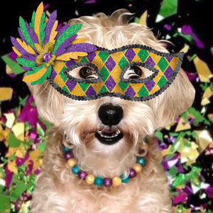 "The Beaded Monkey - Mardi Gras Silicone Beaded Dog Collar - The Beaded Monkey ""Original"" Collection - Photo of Max Wearing Slip On Collar"
