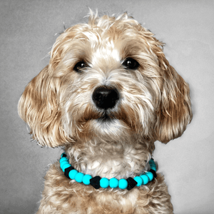 The Beaded Monkey - Tiffany Hearts Silicone Beaded Dog Collar – Ruff Stitched Summer 2020 Collection - Portrait of Dog Wearing Collar