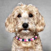 Load image into Gallery viewer, Victorian Floral Silicone Beaded Dog Collar - Portrait of Dog Wearing Collar