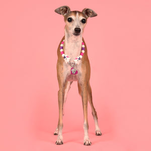 The Beaded Monkey - We Believe Silicone Beaded Dog Collar - Chelsea & Me 2020 Collection - Photo of Chelsea Wearing Slip On Collar