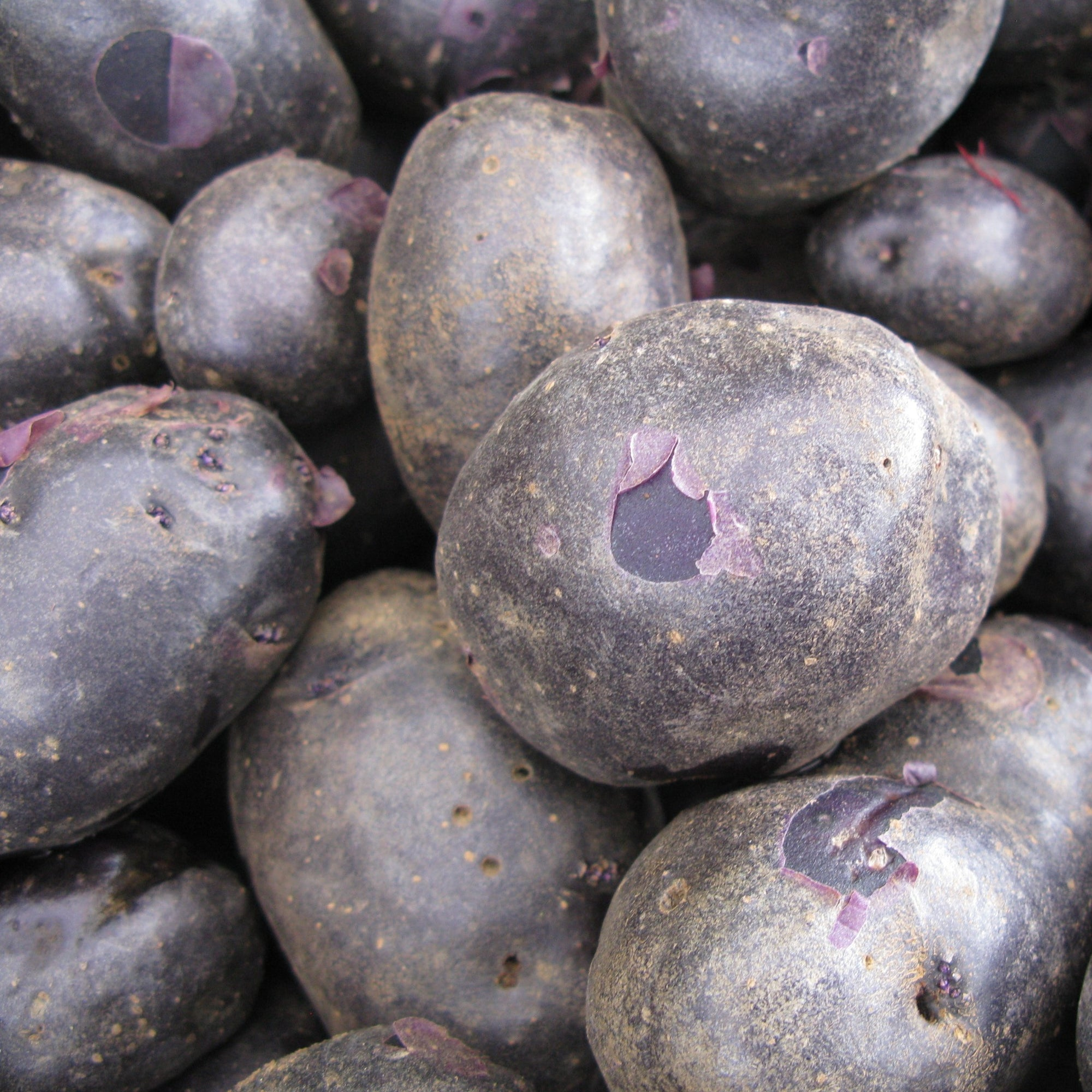 Potatoes | Purple Majesty