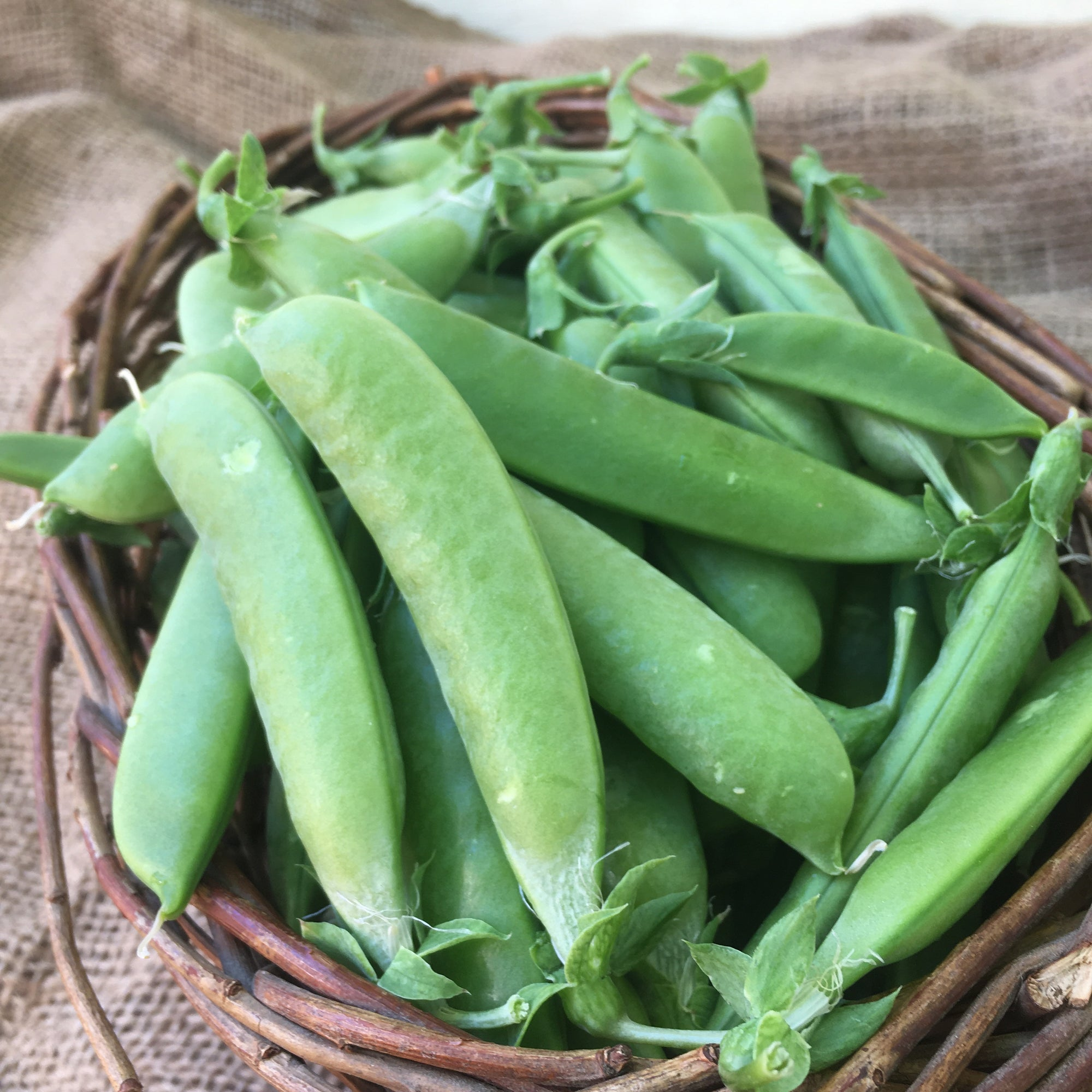 Peas | Sugar Snap