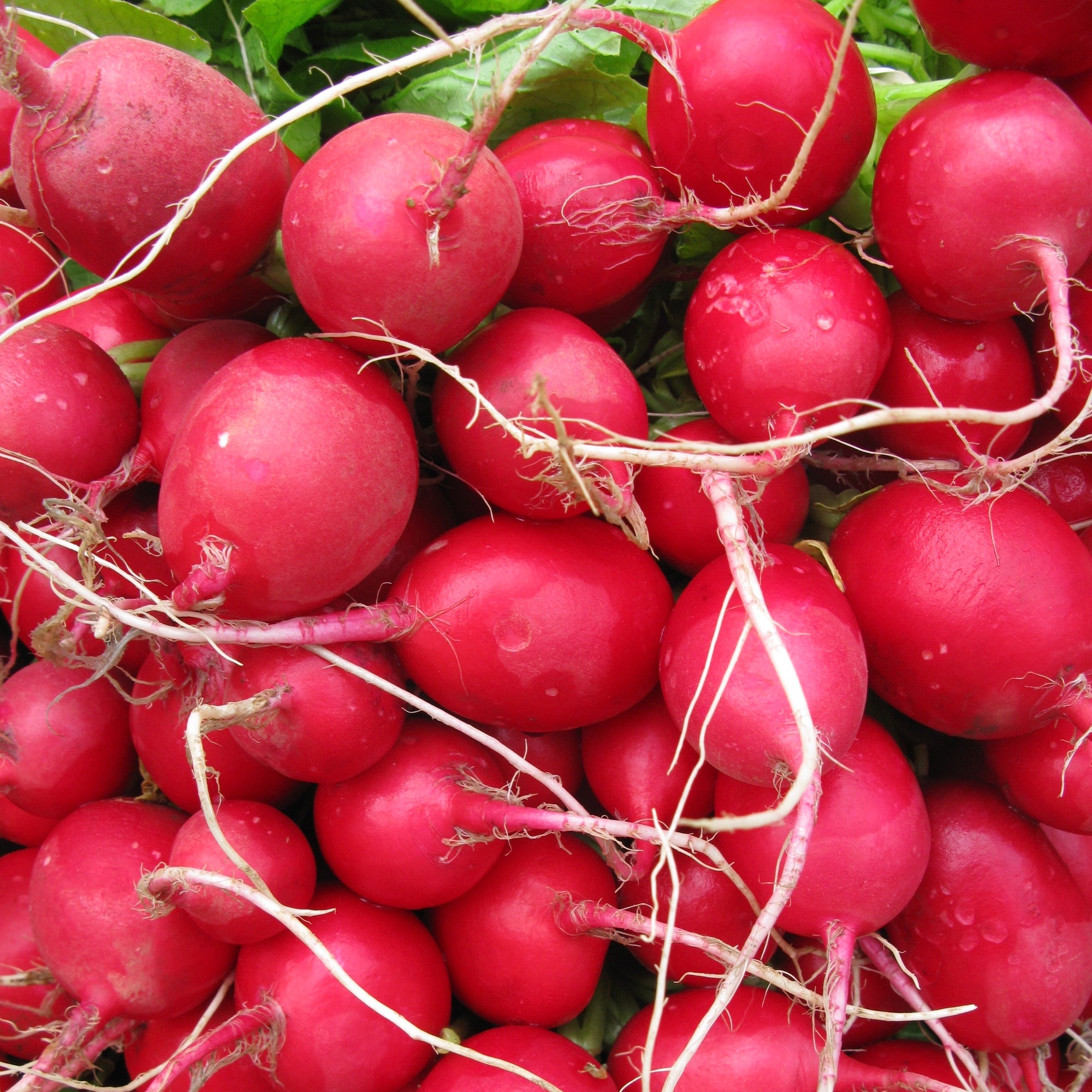Radishes | Red