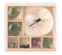 Load image into Gallery viewer, Magnifying Bug Box - Behind The Trees Wooden Toys