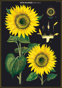 Vintage Poster - Sunflower - Behind The Trees Wooden Toys