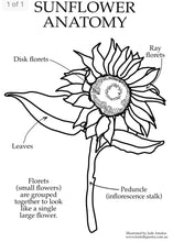Load image into Gallery viewer, Sunflower Anatomy - Behind The Trees Wooden Toys