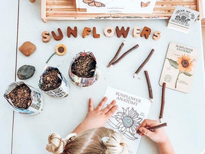 Sunflower Anatomy - Behind The Trees Wooden Toys