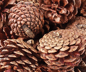 Large Pine Cones - Behind The Trees Wooden Toys