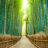 The Truth about Eco-Friendly Bamboo