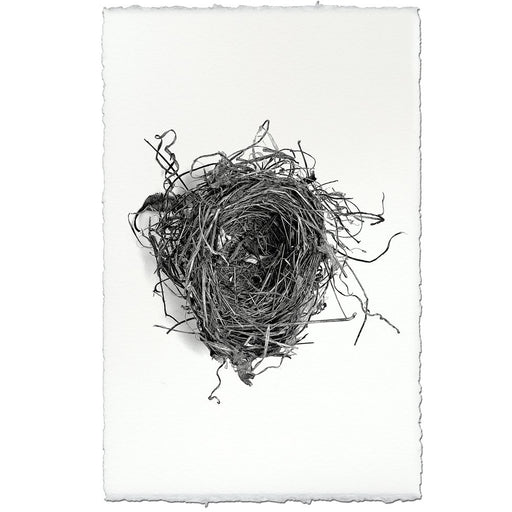 Nest Study Print #3 - The Red Lark Shop