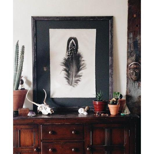 Feather Study Print (Jay) - The Red Lark Shop