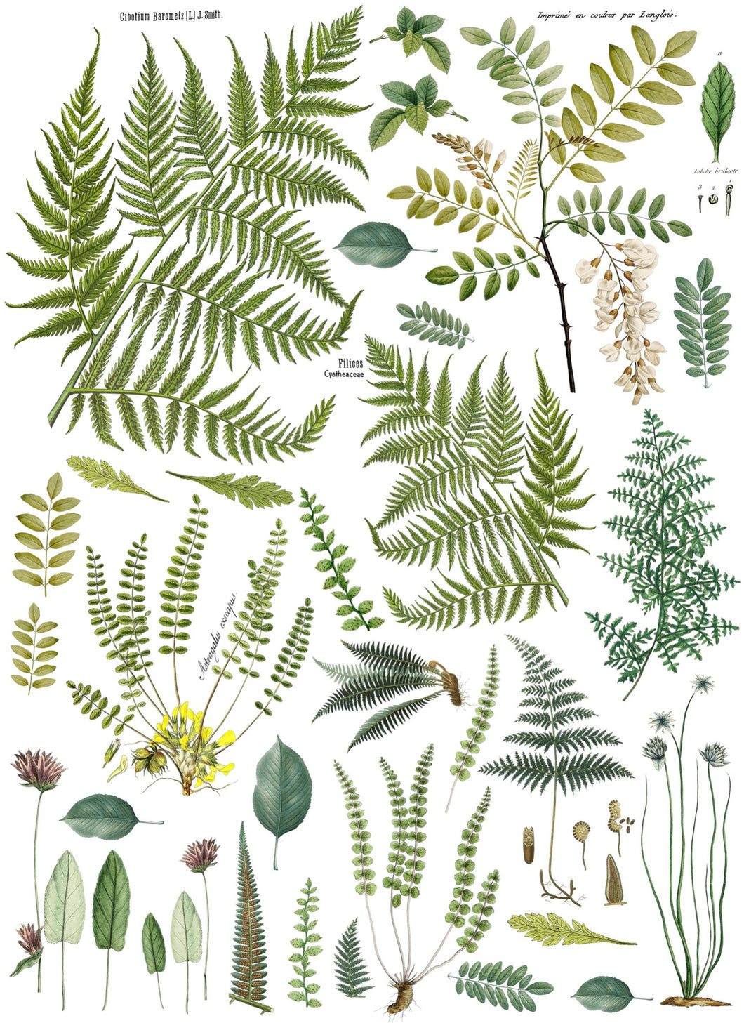 Decor Transfer 24x33 - Frond Botanical