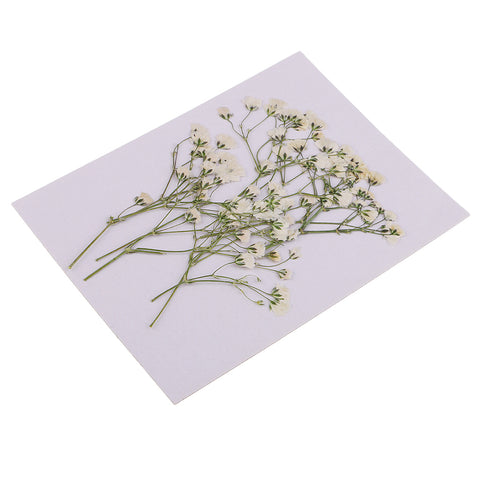 Image of Pack of 10 Real Pressed Dried Flowers Natural Dry Babys Breath Flowers DIY Making Card Handmade Jewelry Resin Crafts Scrapbooking Art Crafts Accessories