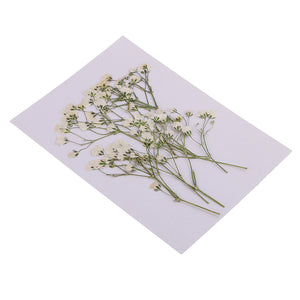 Pack of 10 Real Pressed Dried Flowers Natural Dry Babys Breath Flowers DIY Making Card Handmade Jewelry Resin Crafts Scrapbooking Art Crafts Accessories