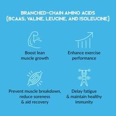 Functional Food Club Nocco Malaysia BCAA how does it works