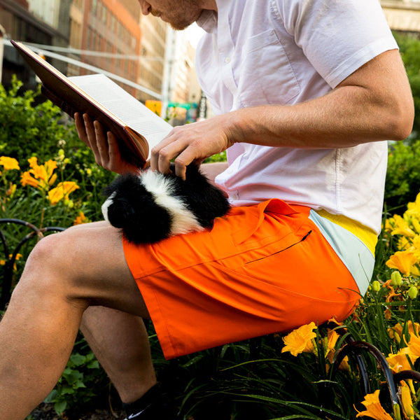 Birddogs The Creamsicles Orange Blue Yellow Gym Shorts Yellow Liner Lifestyle Hamster Book Preorder