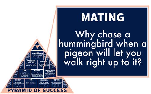 Mating: Why chase a hummingbird when a pigeon will let you walk right up to it?