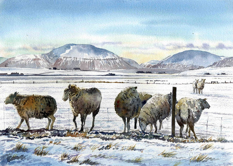 Sheep in snow with Hoy Hills in background