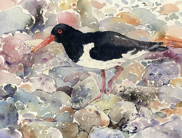 Oystercatcher on the Shoreline