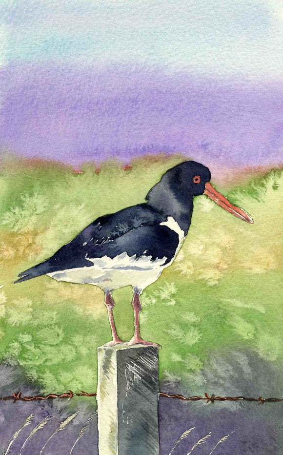 Oystercatcher on a fence post