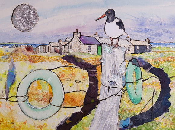 Cottage and oystercatcher, North Ronaldsay