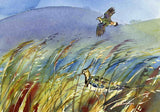 Lapwings and grasses